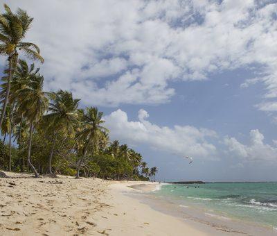 Plage paradisiaque et palmiers - Location Villa à Marie Galante
